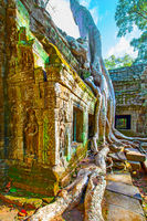 Ancient ruins of Ta Prohm temple