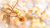 Beech leaves spring fantasy background