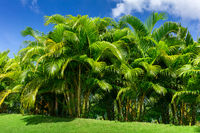 green palm trees against a blue sky