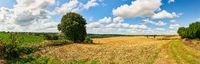 Getreidefeld nach Ernte im Sommer als Panorama