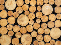 Stack of sawn wood log. Natural wooden texture background