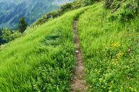 Trampelpfad als Wanderweg in den Bergen