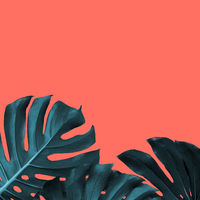 Frame of tropical leaves of monstera on a new color Living Coral background, place for text.