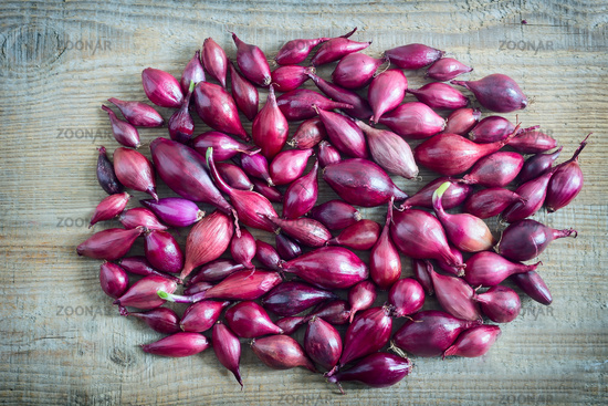 Purple onion sets for planting in the soil