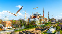 Seagulls and Hagia Sophia