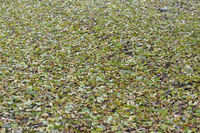 Fallen green leaves by drought in nature