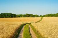 Landscape road wheat field Ukraine