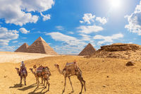The Pyramids and camels with a bedouin in Giza desert, Egypt