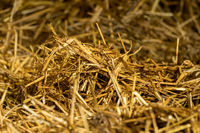 A pile of straw in the stable