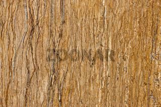 Real natural  ' Travertin Walnut '  texture pattern. Background.