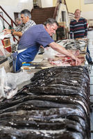 black scabbardfish