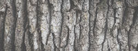 Wide angle abstract background with matte efect, banner format. Texture of oak tree bark close-up