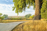 summer on Poudre River Trail