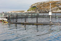 Fish cages for fish farming at sea