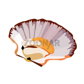 Scallop in shell icon isolated on white background, fresh tasty seafood, healthy food, vector illustration.