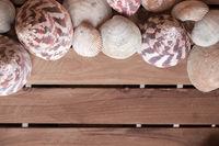 Fame of seashells