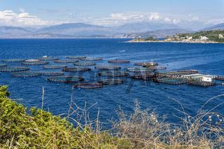 Aquakultur auf Korfu