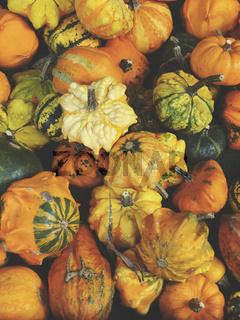 variety of ornamental pumpkins
