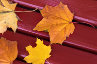 Autumn dry maple leaves on dark red wooden bench