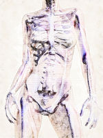 Digital artistic Sketch of the human Anatomy