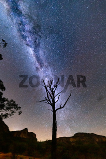 Starry night skies over Gardens of Stone and lone tree