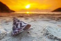 Tropical beach with seashell