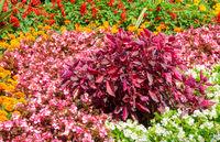 Flowerbed in the garden