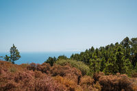fir forest landscape with ocean view and clear blue sky copy space -