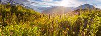 Mountains meadow