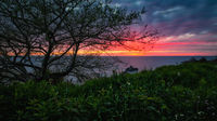 California Sunset with Wildflowers and a Tree