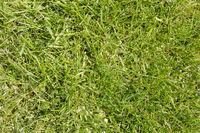 Hintergrund aus Gras