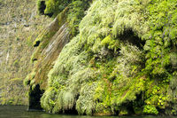 Christmas Tree Waterfall In The Sumidero Canyon