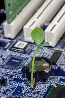 Sprout on a blue motherboard