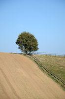 Baum auf einem Acker