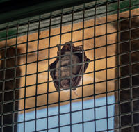 Small bat in window of Johannine Library at University of Coimbra