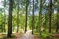 Hiking trail through a lush green spring forest