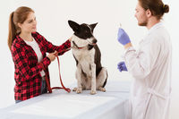 Dog getting checked at vet clinic with thir owner.