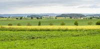 rural scenery in Hohenlohe