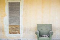 entspannte katze in sessel auf bürgersteig