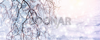 Winter scenic background. Christmas snow landscape with snowdrifts and tree branches covered with snow in the frost. Falling snow on nature outdoors close-up