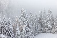 Winter forest in South Tyrol