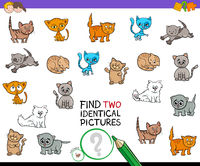find two identical kitten pictures game for kids