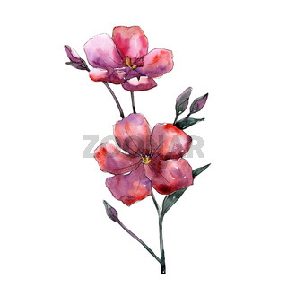 Wildflower pink flax. Floral botanical flower. Isolated illustration element.