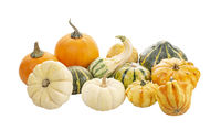 Mini Pumpkins Isolated on a White Background