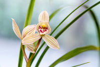orchids closeup in spring