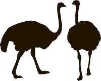 Silhouette big ostrich standing on a white background