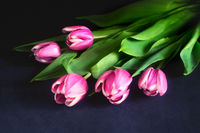 Bouquet of pink tulips on a dark background.