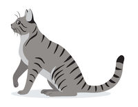 Smooth coated tabby cat with long tail icon, cute gray pet, domestic animal, vector illustration