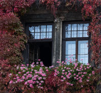 Window with flowers at autumn