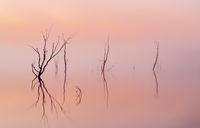 Simplicity - Sunrise on the lake